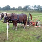2 Holsteiner warten auf ihren Einsatz