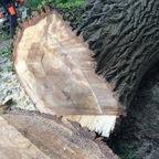Fällung eines kleinen Baumes der durch ein Dach gewachsen ist.